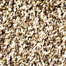 Are You Thinking About Buying Carpet Carpet Depot